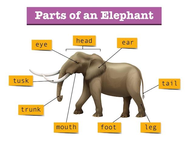 野生の象のさまざまな部分