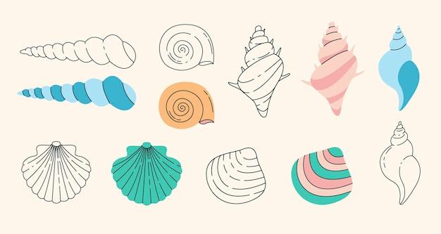 さまざまな貝殻セット