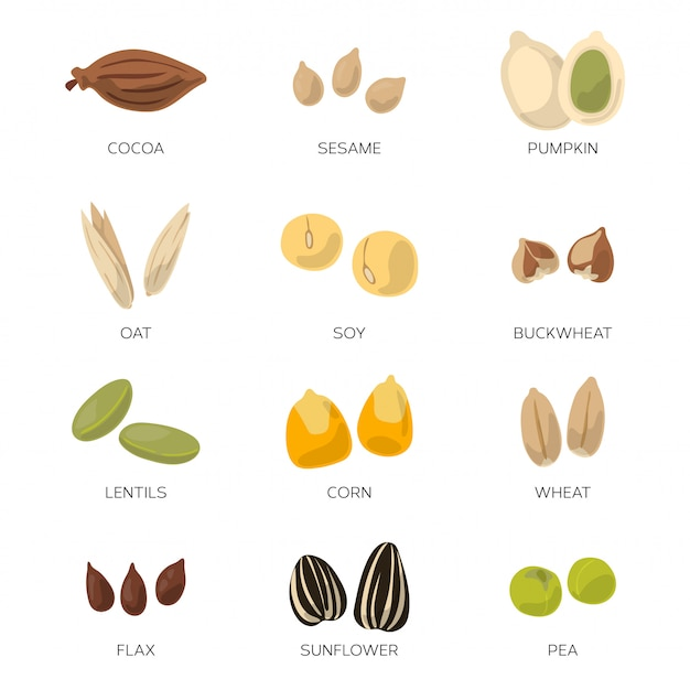 Different seeds isolate on white background