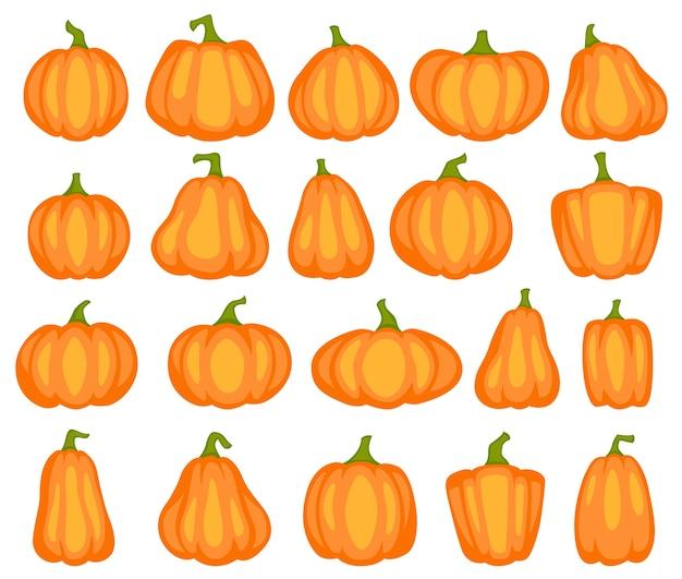 Различные формы и размеры апельсиновой тыквы, овощей урожая сельского хозяйства. день благодарения или хэллоуин декоративный милый рисунок украшение