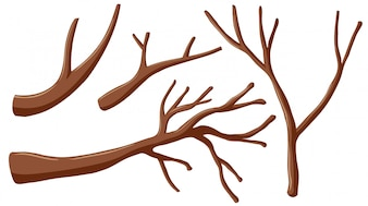 Different shapes of branches