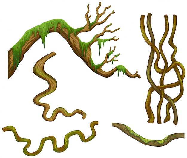 가지의 다른 모양