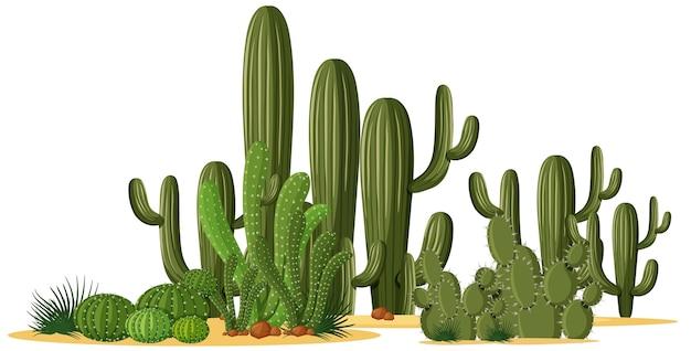 グループ内のさまざまな形のサボテン