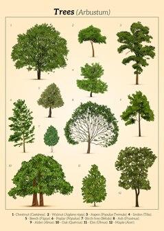 別の木のポスター