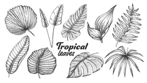 Different tropical leaves