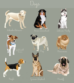 Different type of dogs set isolated