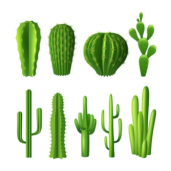 Different types of cactus plants realistic decorative icons set