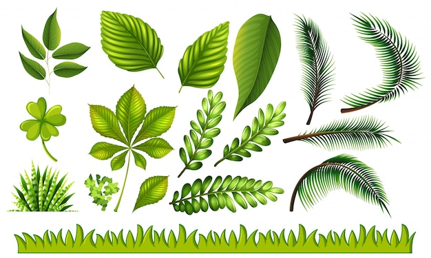 Different types of green leaves and grass illustration