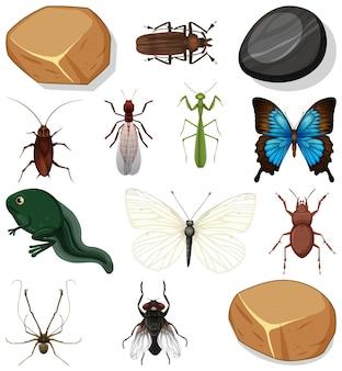 Diversi tipi di insetti con elementi della natura