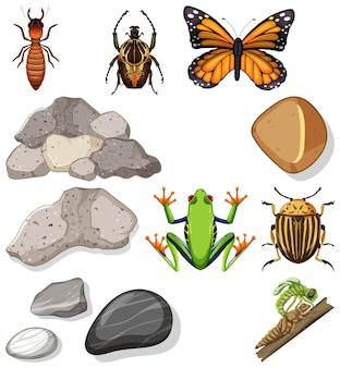 Different types of insect with nature elements