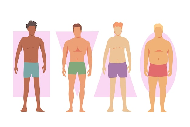 Different types of male body shapes