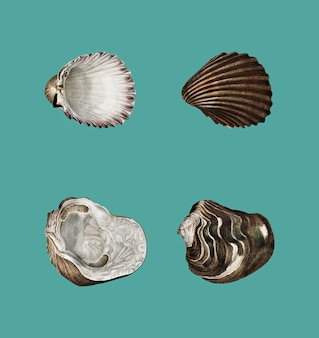 Different types of mollusks illustrated by charles dessalines d'orbigny (1806-1876).