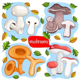 Different types of mushrooms  illustration