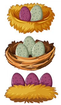 Different types of nests and eggs