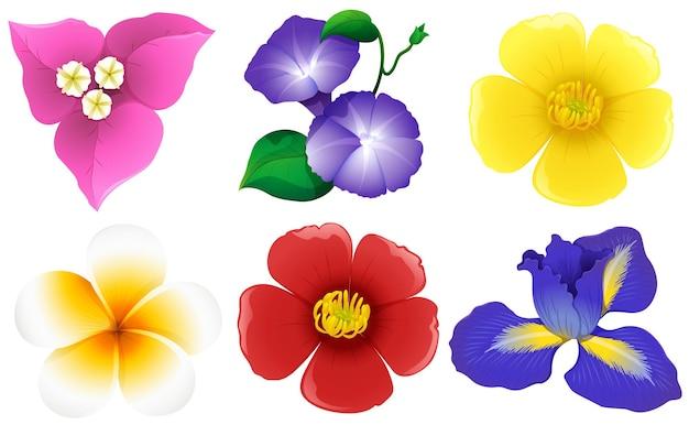 白のさまざまな種類の花