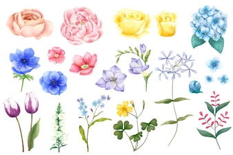 Different types of illustrated flowers isolated on white background.