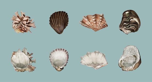 異なる種類の軟体動物が描かれている