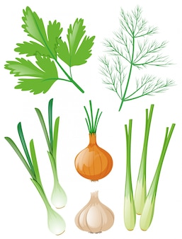 Different types of vegetables on white