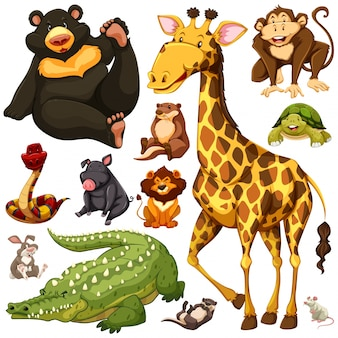 Different types of wild animals illustration
