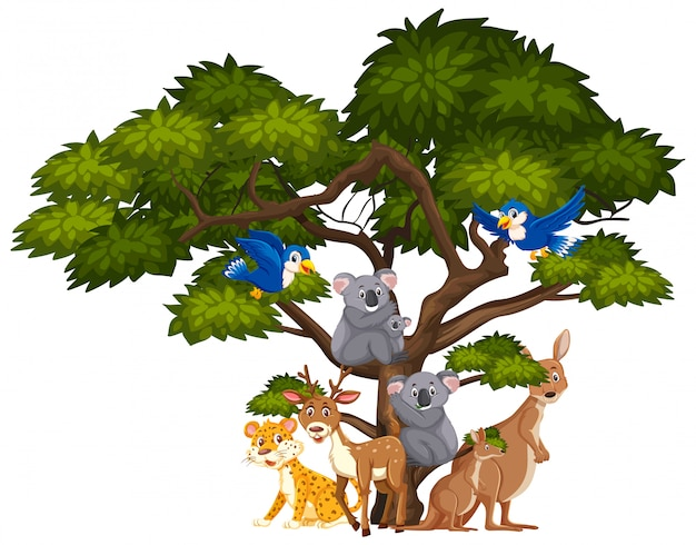白の野生動物の種類