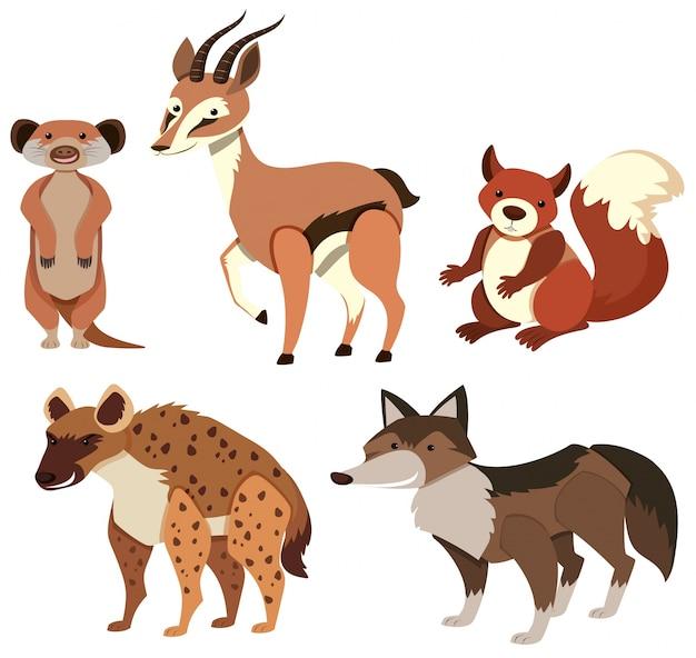 Различные виды диких животных на белом