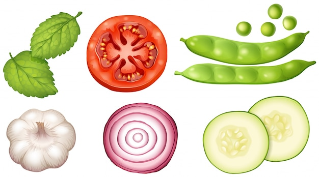Different types of vegetables on white background