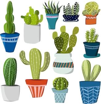 Differents cactus