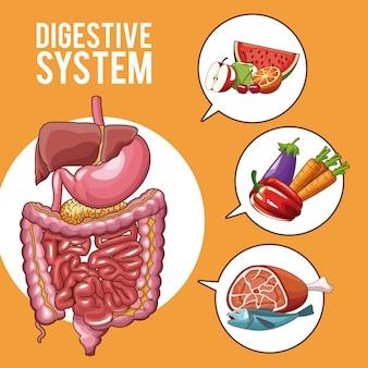 Digestive system human organs