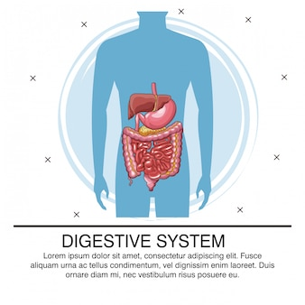 Digestive system infographic with information
