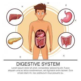 Digestive system organs poster