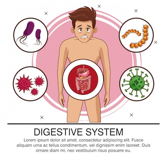 Digestive system poster with information