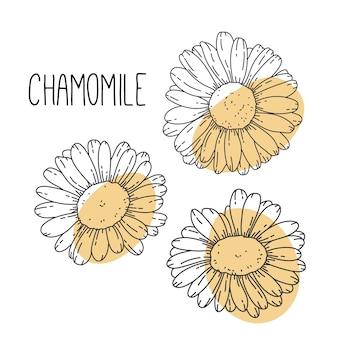Digital illustration set with camomiles flowers