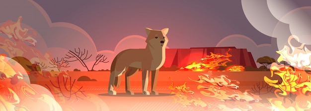 Dingo escaping from fires in australia animal dying in wildfire bushfire natural disaster concept intense orange flames horizontal