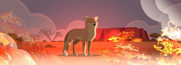 Динго, спасаясь от пожаров в австралии животное умирает в условиях лесного пожара концепция лесного пожара интенсивное оранжевое пламя горизонтальное