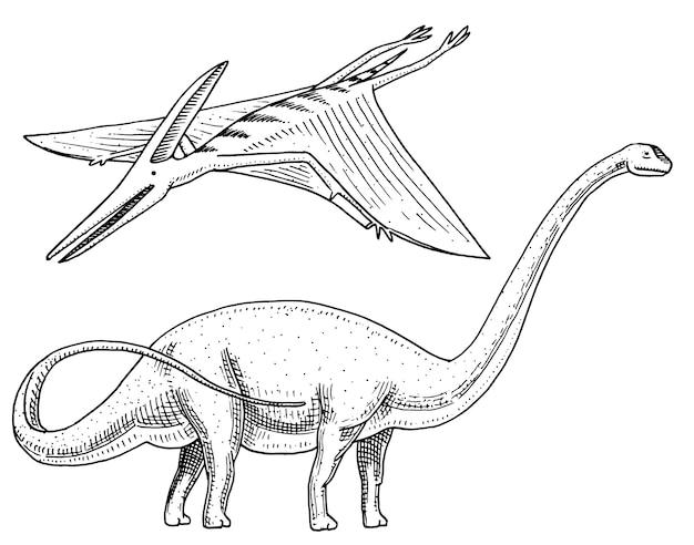 恐竜ブラキオサウルスまたは竜脚類、プラテオサウルス、ディプロドクス、アパトサウルス、翼竜、スケルトン、化石、翼のあるトカゲ。アメリカ先史時代の爬虫類、ジュラ紀の動物が刻まれた手描き。