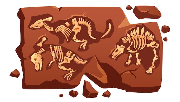 Dinosaur fossil bones, dino skeletons in stone