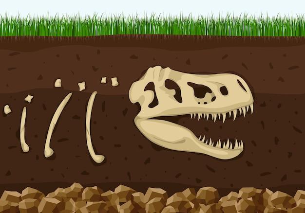 土壌層の恐竜の化石骨格、恐竜の爬虫類の頭蓋骨考古学は骨を埋めました。古生物学