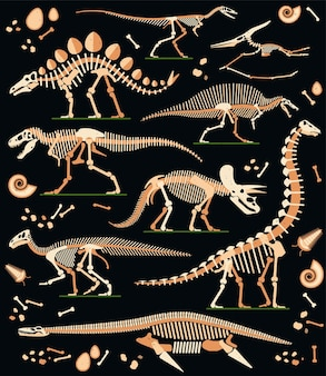 공룡 화석 알 뼈와 해골