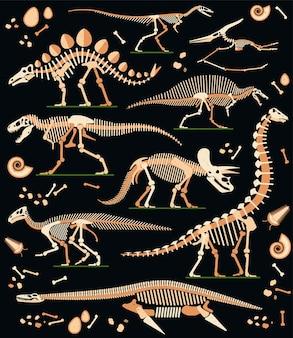 Dinosaur fossils eggs bones and skeletons