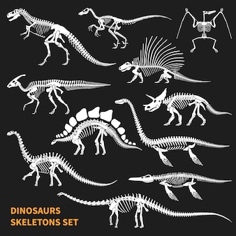 Dinosaurs skeletons set