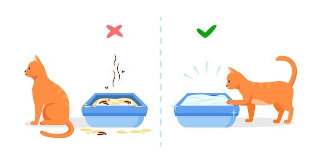 汚れた、きれいな猫のトイレ。ペットトイレを維持するための間違った正しい方法。