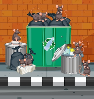 Dirty rats all over trashcans