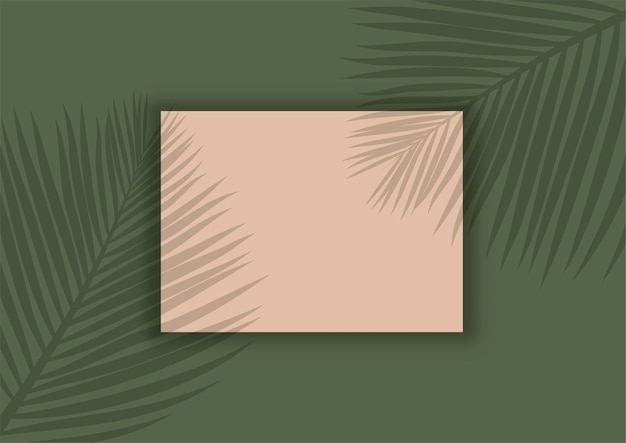 Display background with palm tree leaves shadow overlay