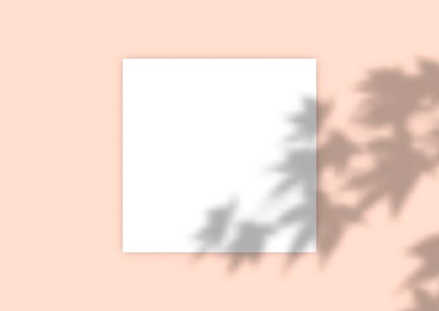 식물 그림자 오버레이로 배경 표시