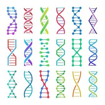 カラフルなdnaアイコン。 adn構造スパイラル、デオキシリボ核酸医学研究および人間生物学遺伝学コードアイコンセット