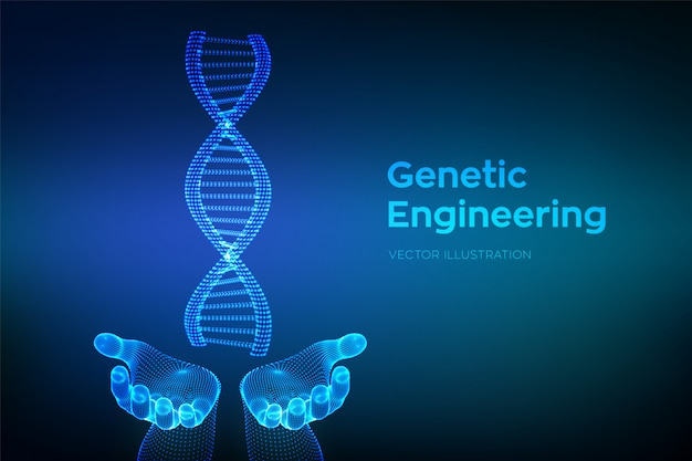 Dna sequence in hands. wireframe dna molecules structure mesh.