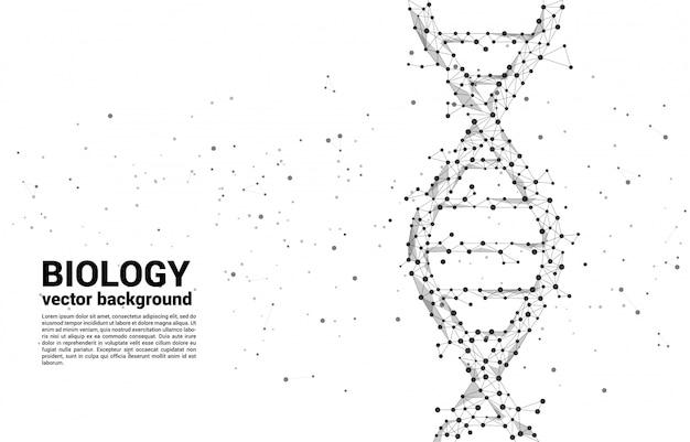 ドット接続線ポリゴンからのベクターdna遺伝子構造。バイオテクノロジーと生物学の科学の背景概念。