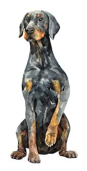 犬のドーベルマン犬。水彩の手描きイラスト。