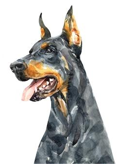 ドーベルマン犬の肖像画。頭の犬の水彩画。ドーベルマンペイント。