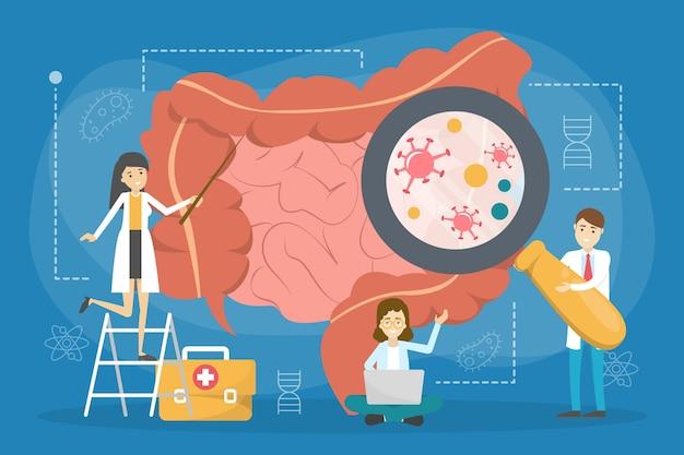의사는 대장을 확인하고 치료합니다. 소화기 건강에 대한 아이디어. 내부 장기, 의학 개념. 삽화